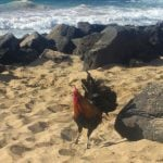 Real Estate Market Update: Roosters & Mother Nature